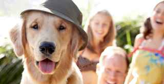 Dogs, man's best friend, can actually help you live longer