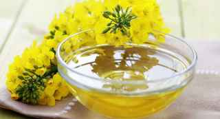 Canola Oil Versus Vegetable Oil in Belly Fat Loss